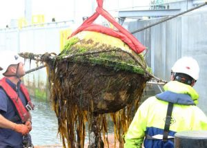 New initiative and project on marine energy biofouling announced