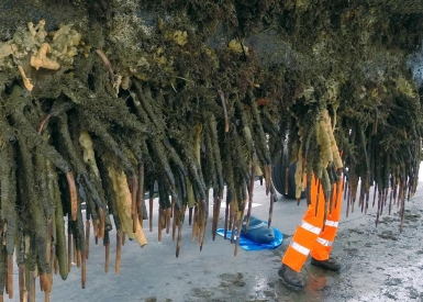 IMO launches industry partnership on biofouling. Image credit: Hamish Lass, BOP